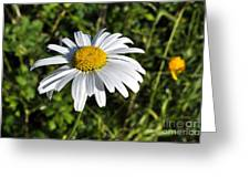 Common Daisy Greeting Card