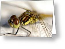 Common Darter  Dragonfly Compound Eye And Synthorax Greeting Card