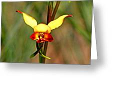 Common Donkey Orchid. Greeting Card