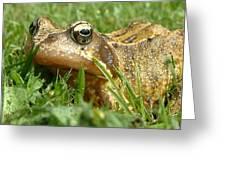 Common Frog Rana Temporaria Greeting Card