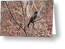 Common Grackle In Spring Greeting Card