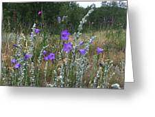 Common Harebell Greeting Card