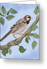 Common House Sparrow Greeting Card