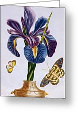 Common Iris With Butterflies Greeting Card