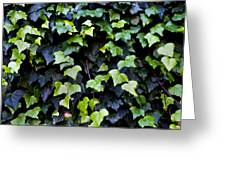 Common Ivy Greeting Card