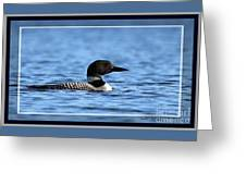Common Loon, Framed Greeting Card