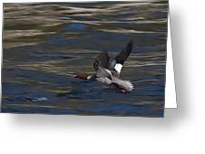 Common Merganser Duck Greeting Card