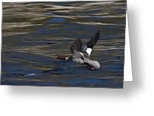 Common Merganser Duck Greeting Card