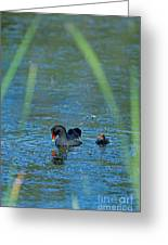Common Moorhen And Her Baby Greeting Card