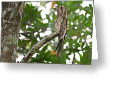 Common Potoo Costa Rica Greeting Card