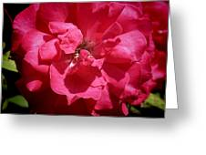 Common Rose Greeting Card