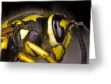 Common Wasp Vespula Vulgaris Close-up Greeting Card