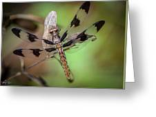 Common Whitetail Dragonfly Greeting Card