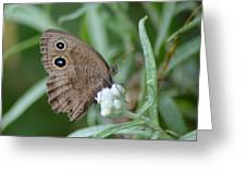 Common Wood Nymph Greeting Card
