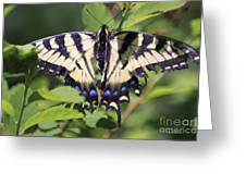 Common Yellow Swallowtail Greeting Card
