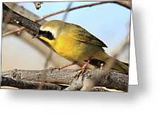 Common Yellowthroat #2 Greeting Card