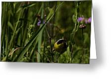 Common Yellow Throat Greeting Card