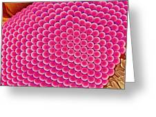 Compound Eye Of A Mosquito, Sem Greeting Card
