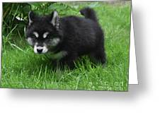 Concern Expressed On The Face Of An Alusky Pup Greeting Card