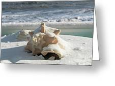 Conch Shell In Snow Greeting Card