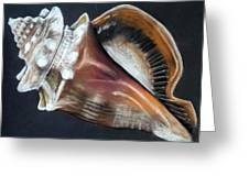 Conch Study Greeting Card