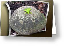 Concrete Toad Stool Greeting Card