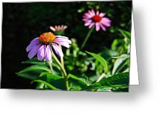 Cone Flower Greeting Card by Beverly Cazzell