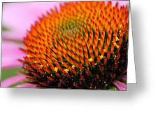 Cone Flower Closeup Greeting Card