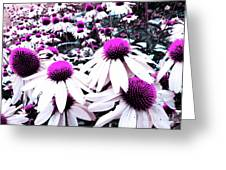 Cone Flower Delight Greeting Card by Kevyn Bashore