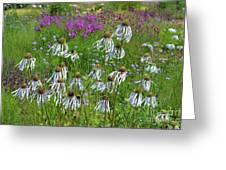 Cone Flower Fairy Dance Greeting Card