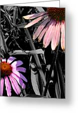 Cone Flower Tapestry Greeting Card