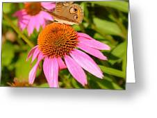 Cone Flower Visitor Greeting Card