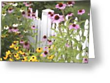 Cone Flowers And Fence Greeting Card