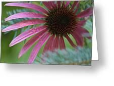 Coneflower Amongst Evergreen Greeting Card
