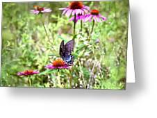 Coneflower Companion Greeting Card