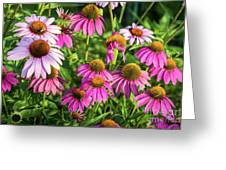 Coneflower Garden Greeting Card