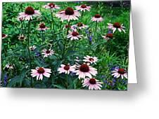 Coneflower Garden Greeting Card