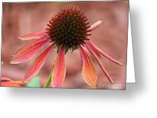 Coneflower Greeting Card