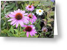 Coneflower Meadows Greeting Card