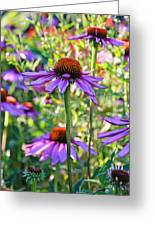 Coneflower Pedals Greeting Card