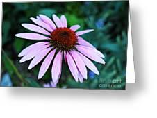 Coneflower Portrait Greeting Card