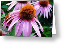 Three Coneflowers  Greeting Card