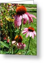 Coneflowers In Garden Greeting Card