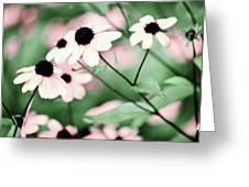 Coneflowers No. 8-2 Greeting Card