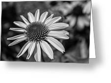 Conehead Daisy In Black And White Greeting Card
