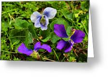 Confederate And Purple-blue Violets Greeting Card