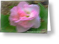Confederate Rose Greeting Card