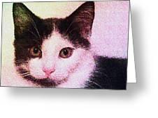 Confetti Kitty Greeting Card