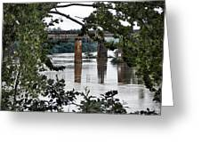 Congaree River Glimpse Greeting Card
