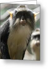 Congo Monkey2 Greeting Card